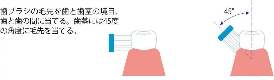 ①毛先を歯や歯茎の境目に当てる