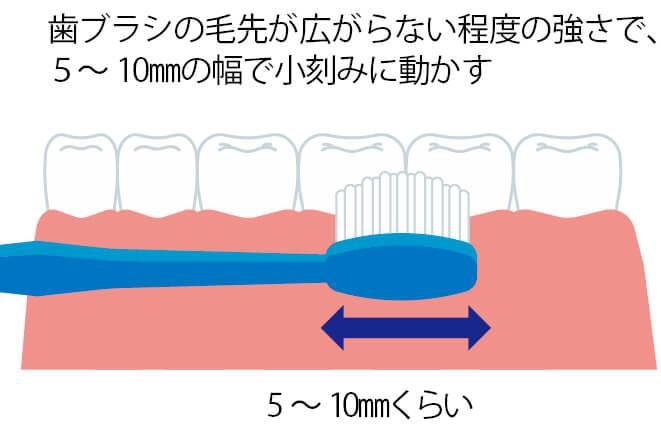 ②歯ブラシを小刻みに動かす