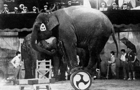 昭和11年、楽隊の曲に合わせた象の曲芸