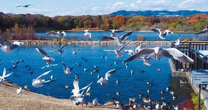 絵柄のモチーフになった、渡り鳥の飛来地昆陽池公園