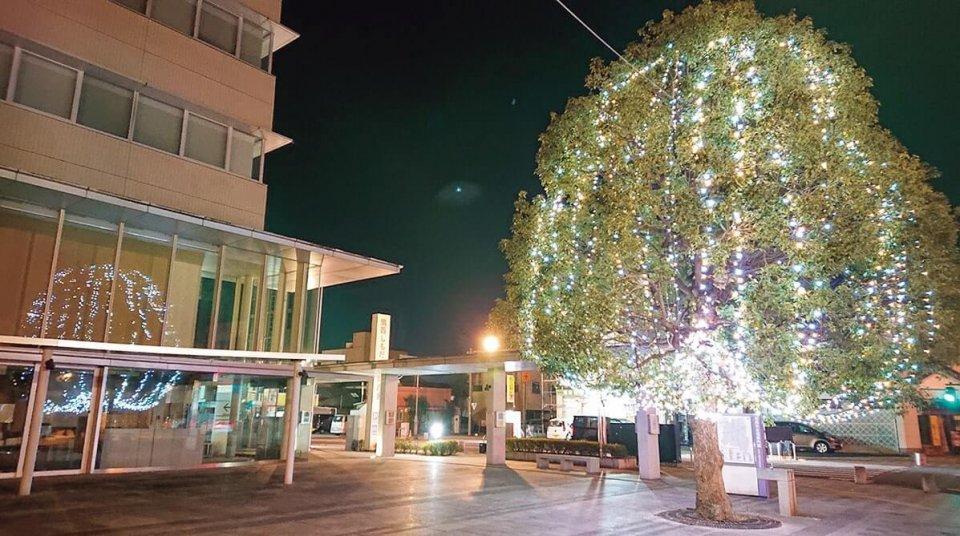 税務署の窓まで照らすツリー